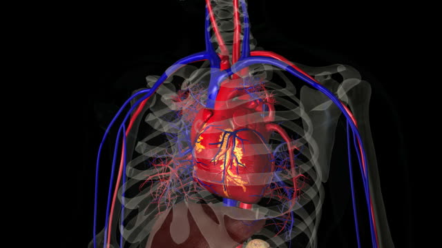 zoom into heart - anatomy stock videos & royalty-free footage