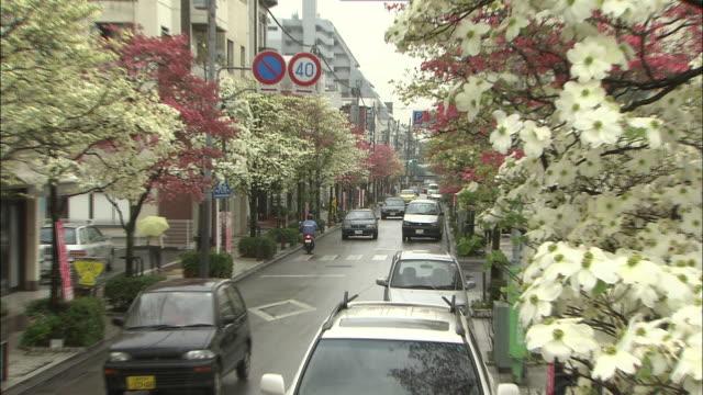 vídeos de stock e filmes b-roll de zoom out as cars travel along street lined with flowering dogwood trees, koshu, yamanashi - cornus