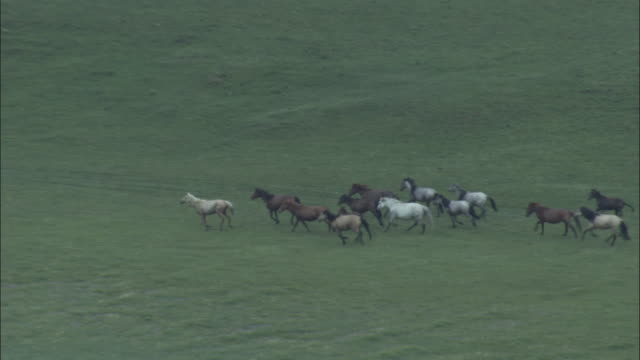 vídeos y material grabado en eventos de stock de zoom out as herd of horses run through grassland alongside river, bayanbulak grasslands. - estepa