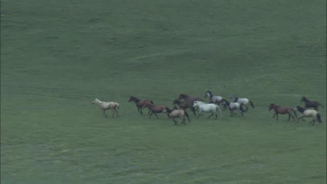 stockvideo's en b-roll-footage met zoom out as herd of horses run through grassland alongside river, bayanbulak grasslands. - steppe