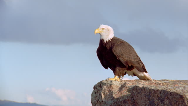 zoom out bald eagle sitting on rock above valley - 1998年点の映像素材/bロール