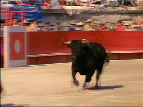 zoom out PAN bull charging through matador's cape + trotting around bullfighting arena