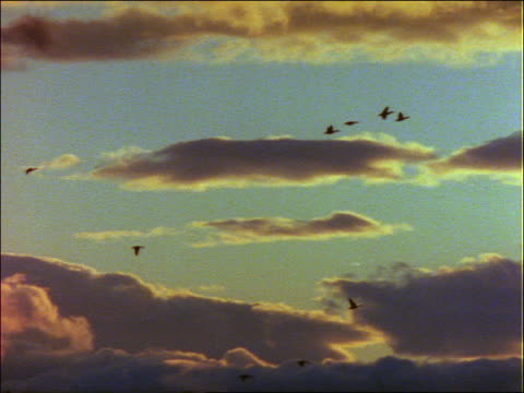 zoom out PAN flock of birds flying against dark clouds at sunset