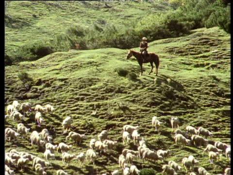 zoom out from herdsman watching sheep to yurt, tian shan mountains, kazakhstan - kazakhstan stock videos and b-roll footage