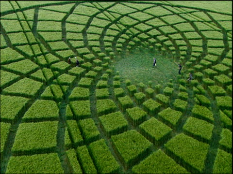 zoom out from men walking through crop circle in barley field wiltshire - orzo video stock e b–roll