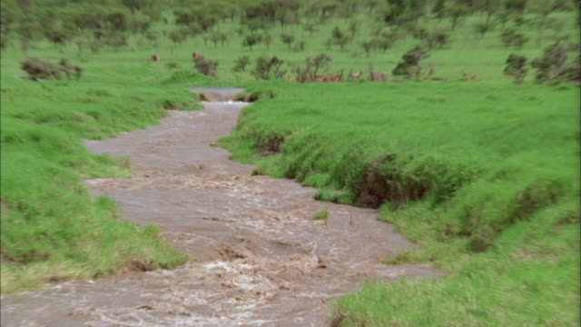 Zoom out from muddy river flowing through South African veldt Available in HD.