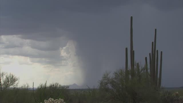 vídeos y material grabado en eventos de stock de zoom out from saguaro cactus and jumping cactus (opuntia fulgida) to very heavy dark rain shaft in distance, sonoran desert, arizona, usa - cactus saguaro