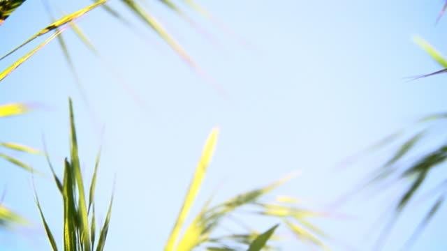 vidéos et rushes de zoom arrière du ciel et herbe en haute définition, espace de copie - zoom arrière