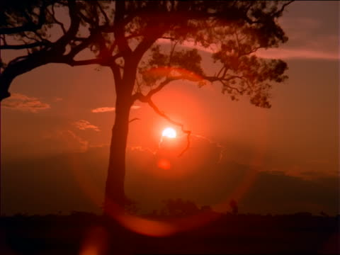 zoom out from sunset to wide shot of plains with silhouette of trees in foreground / penthanal, mato grosso, brazil - romantische stimmung stock-videos und b-roll-filmmaterial