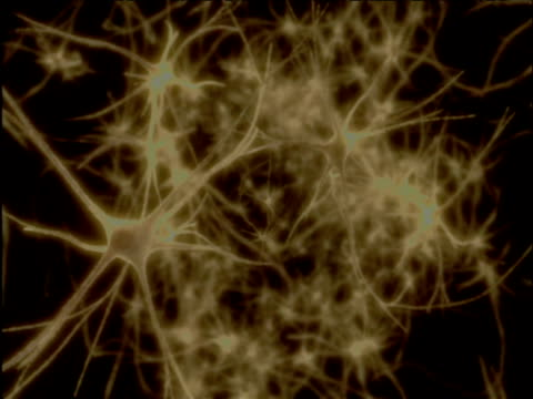 zoom out from synapses to view of brain - human nervous system stock videos & royalty-free footage