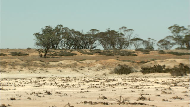 Zoom out from trees to land that has turned into desert due to drought and salinisation Australia