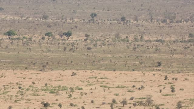 zoom out landscape shot of the savannah in kruger national park the kruger national park was established in 1898 and is south africa's premier... - 自然保護区点の映像素材/bロール