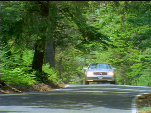 zoom out man in convertible Mercedes Benz driving on tree-lined road towards camera / Whidbey Island, WA