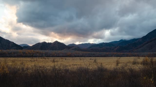 暗闇の中、日本に秋フェード小田代ヶ原フィールドをズームインします。 - 茶色背景点の映像素材/bロール
