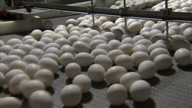 zoom out of eggs on conveyor belt. - roh stock-videos und b-roll-filmmaterial