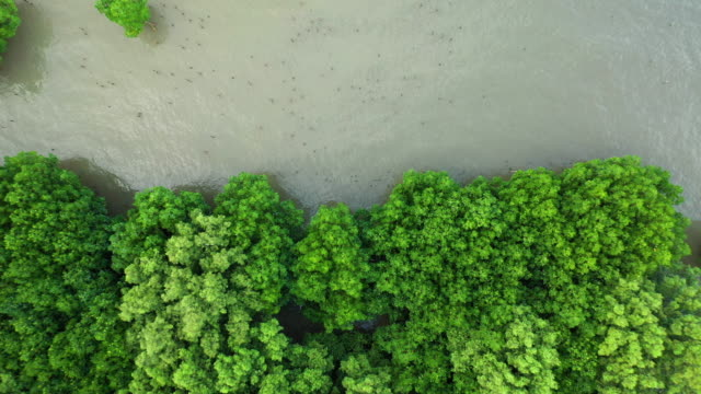 zoom out of mangrove forest aerial view - tropical tree stock videos & royalty-free footage