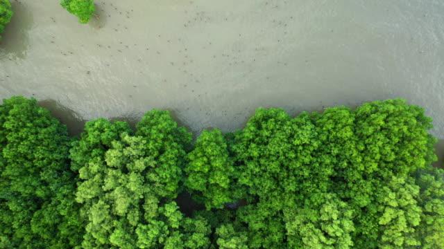 zoomen sie aus der mangrovenwald-luftansicht - flugzeug in der luft stock-videos und b-roll-filmmaterial