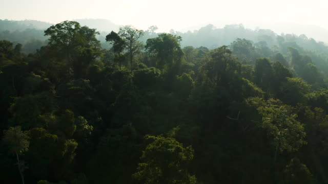 vidéos et rushes de zoom hors de la forêt tropicale le matin - tropical