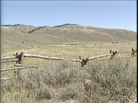 zoom out of two horses grazing in field in wyoming - wyoming stock videos & royalty-free footage