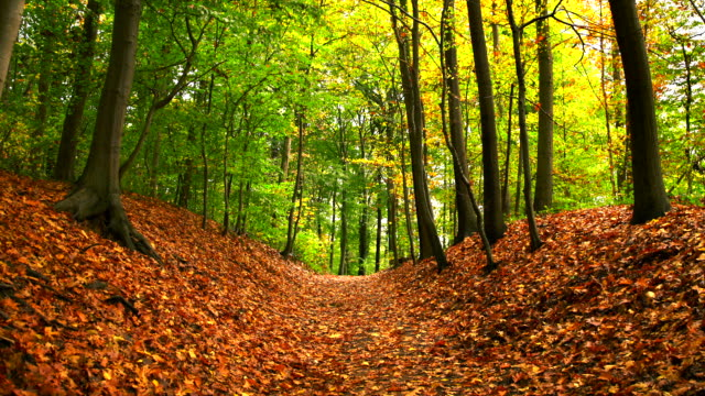 zoom out on autumn forest path full of leaves