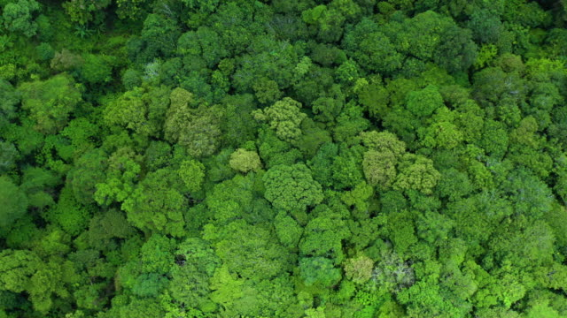 zoom out rotate top view of lush foliage rainforest - biodiversity stock videos & royalty-free footage