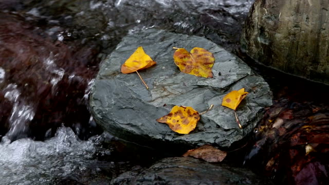 zoom out shot of golden leaves on rocks in water in river. - mcdonald creek stock-videos und b-roll-filmmaterial