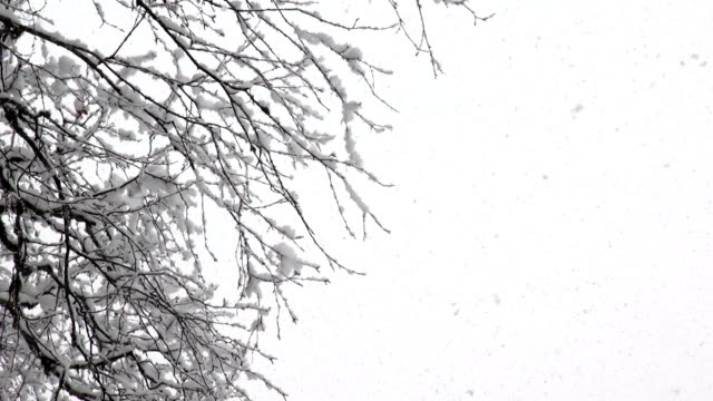 zoom out shot of snow covered trees in mountains during heavy puffy snowflake snow storm. - glacier national park us stock videos and b-roll footage