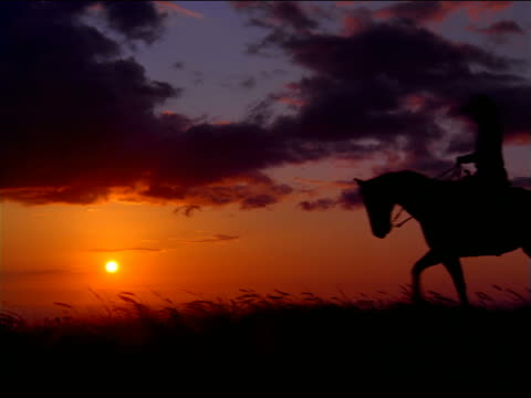 zoom out SILHOUETTE four cowboys + cowgirls riding horses in windy field at sunset