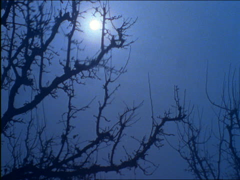 stockvideo's en b-roll-footage met zoom out to bare tree branches with moon in background - bare tree