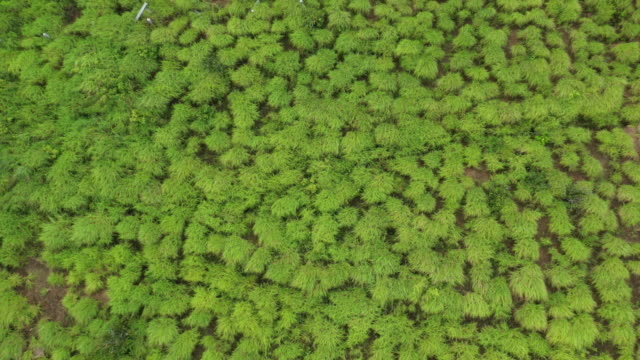 zoom out top view of grass texture with windy motion - seaweed stock videos & royalty-free footage