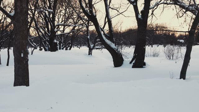 雪に覆われた土地や枝で冬の木立のビデオをズームアウト - winter点の映像素材/bロール
