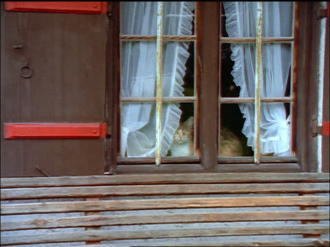 stockvideo's en b-roll-footage met zoom out zoom in cat lying in window with white curtains / bavaria, germany - beieren