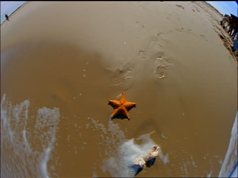 FISHEYE zoom out + zoom in starfish on wet sand on beach / water splashes over it