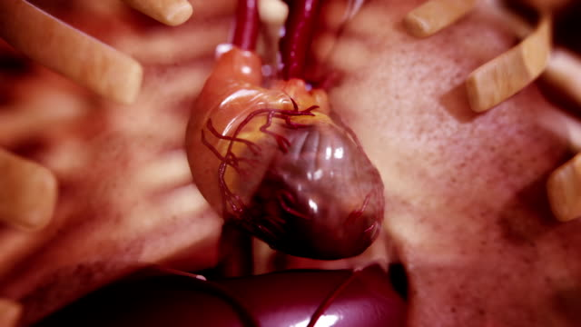 stockvideo's en b-roll-footage met zoom to heart - anatomie