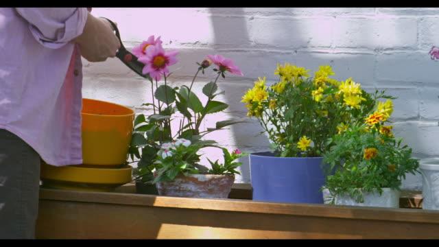 vídeos de stock, filmes e b-roll de zoomed view of woman using scissors to cut and trim her flowers. - pau objeto manufaturado