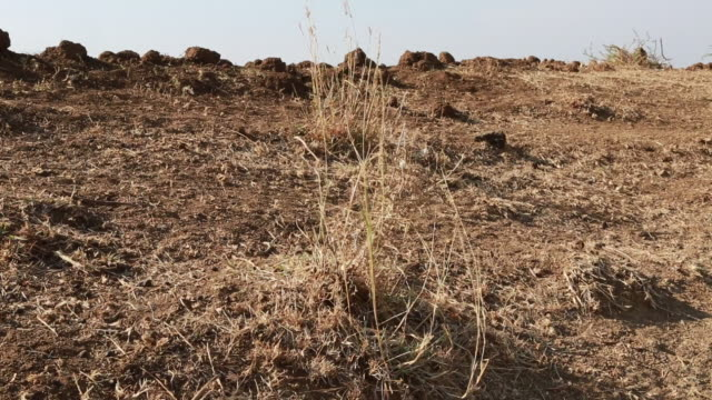 Zoomed withered grass on a field in a barren landscape