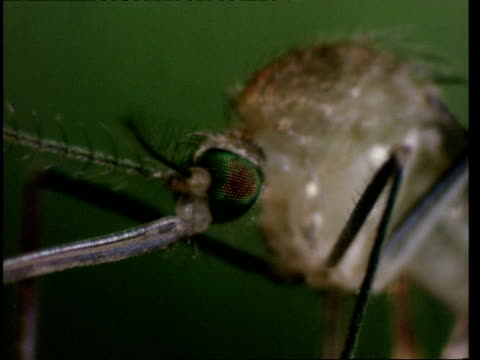 bcu zooming out, mosquito emergence - emergence stock videos & royalty-free footage