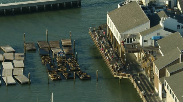 zooming out shot of sea lions resting on floating platforms at the k-dock of the pier 39 at sunset - travel destinations stock videos & royalty-free footage