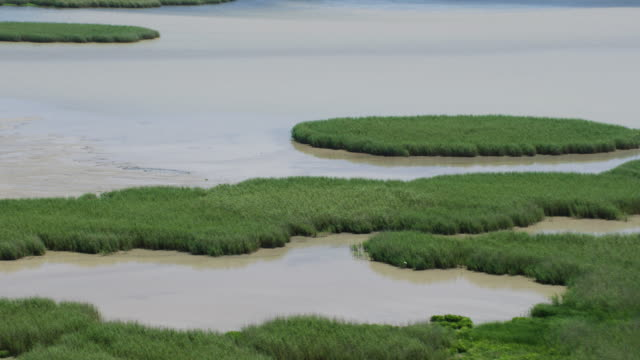 zooming out shot of the wetland at the mississippi river delta - bulrush stock videos & royalty-free footage