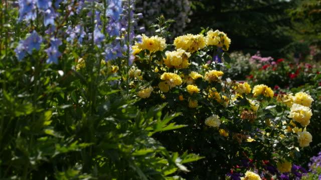 Zweibruecken Rose Garden, Zweibruecken, Rhineland-Palatinate, Germany